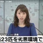 堀口妙子、顔画像や職業は?猫23匹を虐待し、逮捕!